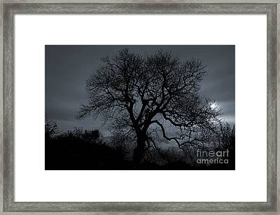 Tree Silhouette Framed Print by Ian Mitchell