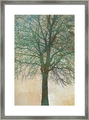 Tree Silhouette II Framed Print by Cora Niele