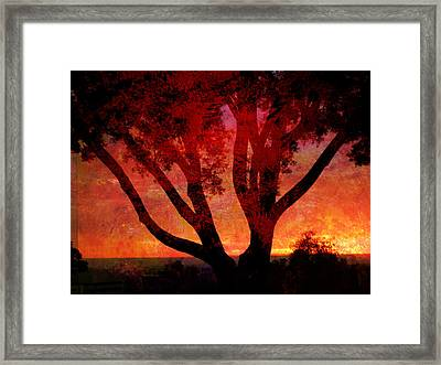 Tree Silhouette In Sunset Abstraction Framed Print