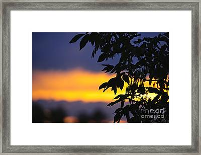 Tree Silhouette Over Sunset Framed Print by Elena Elisseeva