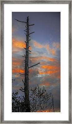 Tree Silhouette Framed Print by Paul Freidlund