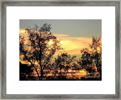 Tree Silhouette With Sunset Framed Print by Renee Trenholm