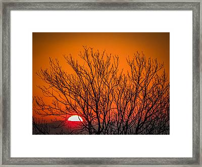 Tree Silhouetted By Irish Sunrise Framed Print