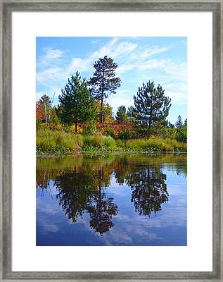 Tree Sisters Framed Print