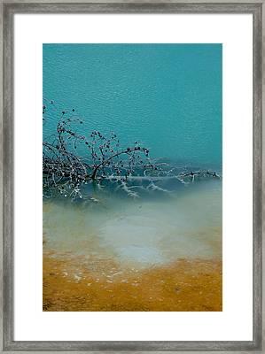 Tree Skeleton Framed Print by Sarah Crites