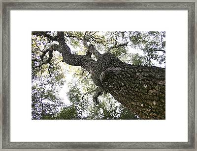 Tree Still Framed Print