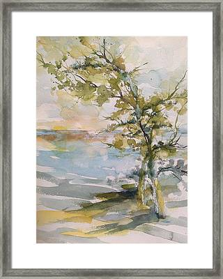 Tree Study Framed Print by Robin Miller-Bookhout