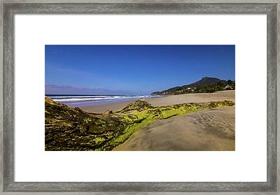 Tree Stump Framed Print by Aged Pixel