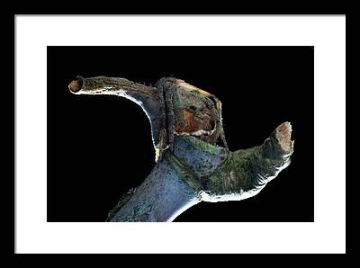 Araneidae Framed Prints