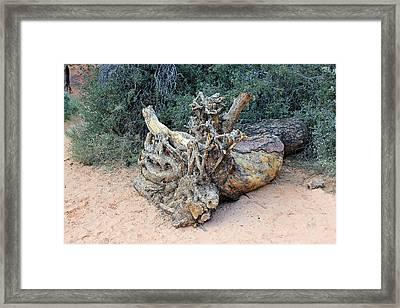 Tree Stump Framed Print