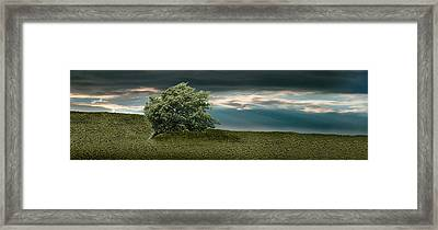Tree Swaying In Storm Framed Print by Panoramic Images