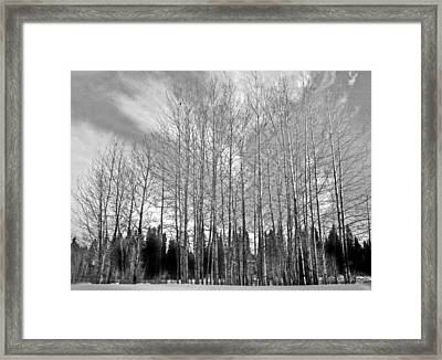 Framed Print featuring the photograph Tree Sweep by Tarey Potter