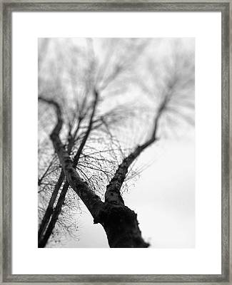 Tree Framed Print by Taylan Apukovska