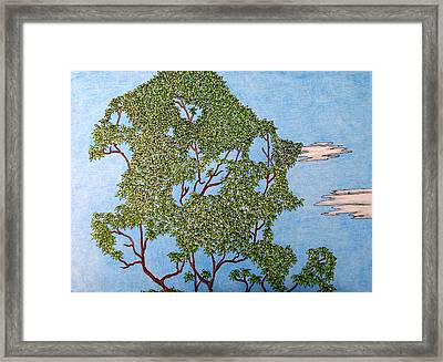 Tree Top 1 Of 3 Framed Print