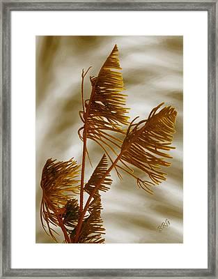 Tree Top Framed Print by Ben and Raisa Gertsberg