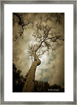 Tree Top In The Clouds Framed Print by Barbara Snyder