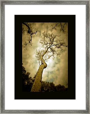 Tree Top In The Clouds Duvet Framed Print by Barbara Snyder
