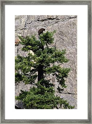 Tree Topper Framed Print by Randy Giesbrecht