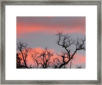 Tree Tops  Framed Print by Debra Madonna