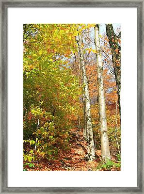 Framed Print featuring the photograph Tree Trail by Alicia Knust