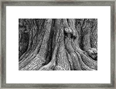 Tree Trunk Closeup Framed Print