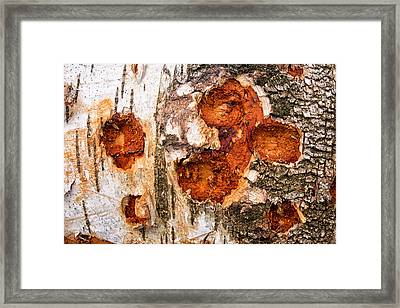 Tree Trunk Closeup - Wooden Structure Framed Print