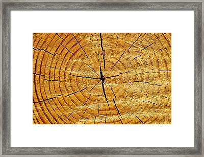 Framed Print featuring the photograph Tree Trunk by Fabrizio Troiani