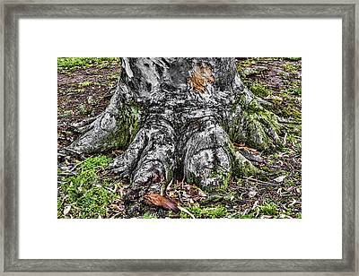 Tree Trunk Framed Print by Photographic Art by Russel Ray Photos
