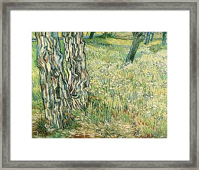 Tree Trunks In Grass Framed Print by Vincent van Gogh