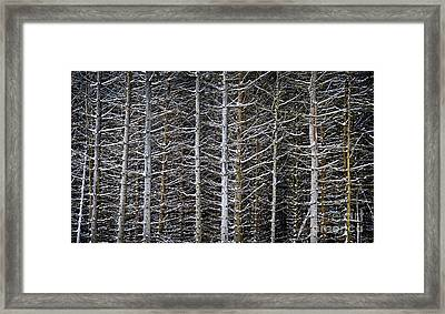 Tree Trunks In Winter Framed Print by Elena Elisseeva
