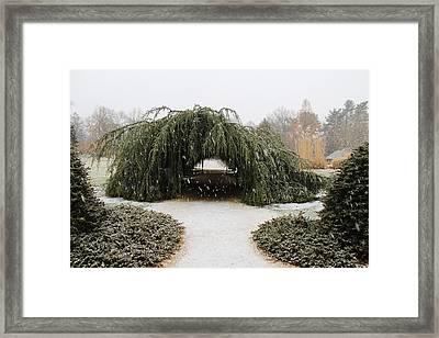 Tree Tunnel Framed Print by Karen Silvestri