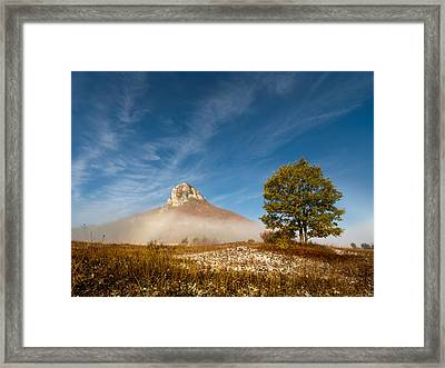 Tree Under The Hill Framed Print by Davorin Mance
