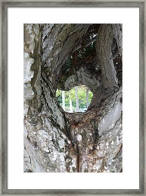 Framed Print featuring the photograph Tree View by Rafael Salazar