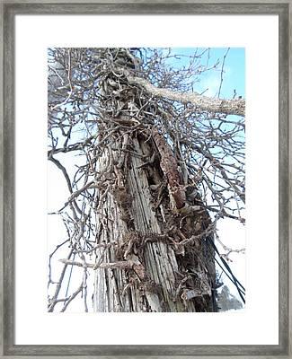 Tree Vines Framed Print by Jenna Mengersen