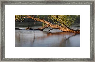 Tree Wash Framed Print by Theo O Connor