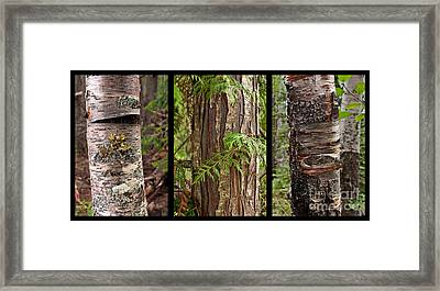 Framed Print featuring the photograph Tree Wear By Nature by Sandi Mikuse
