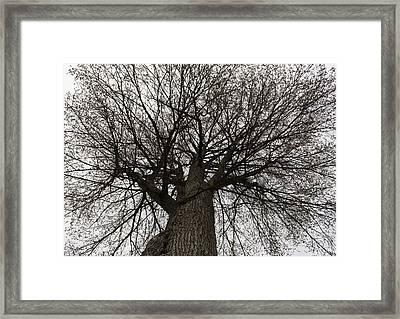 Tree Web Framed Print