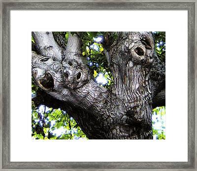 Tree With A Heart Framed Print by Dan Twyman
