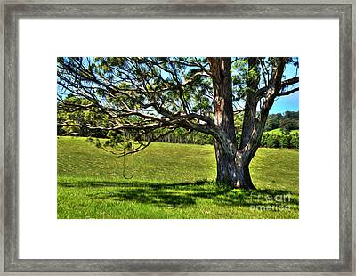 Tree With A Swing Framed Print by Kaye Menner