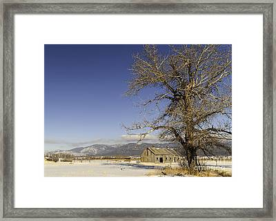 Tree With Barn Framed Print by Sue Smith