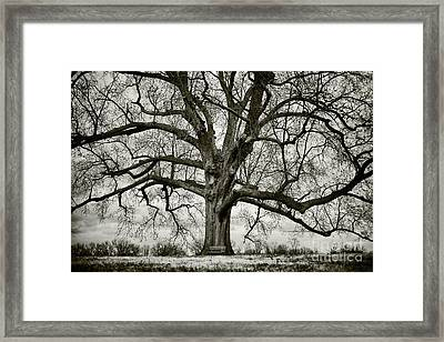 Tree With Bench Framed Print by Greg Ahrens