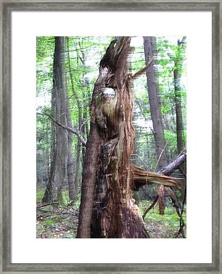 Framed Print featuring the photograph Tree With Faces by Melissa Stoudt