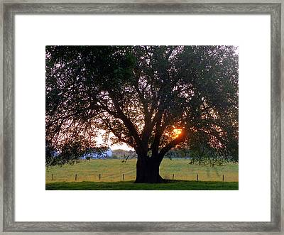 Tree With Fence. Framed Print