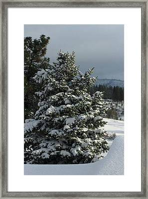 Tree With Snow Framed Print