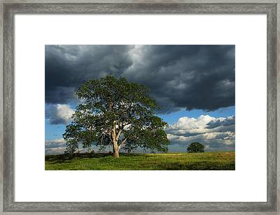 Tree With Storm Clouds Framed Print by Robert Woodward