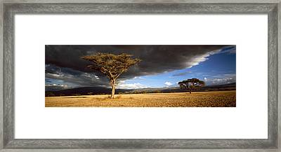 Tree W\storm Clouds Tanzania Framed Print by Panoramic Images
