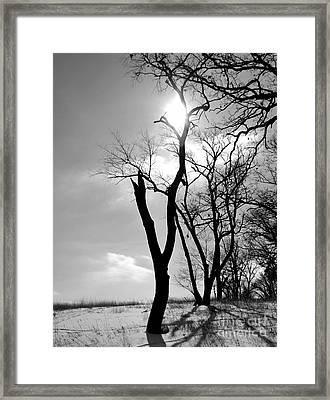 Tree3 Framed Print