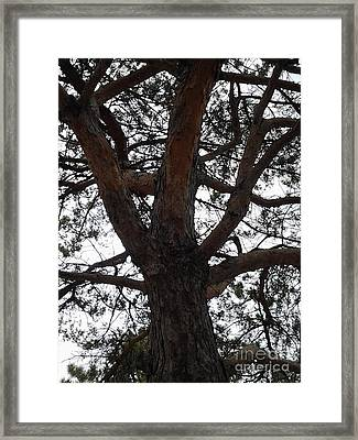 Tree4 Framed Print