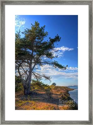 Treebay Framed Print