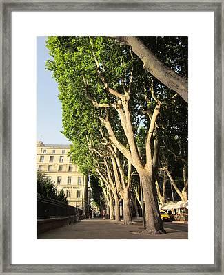 Treed Avenue Framed Print by Pema Hou